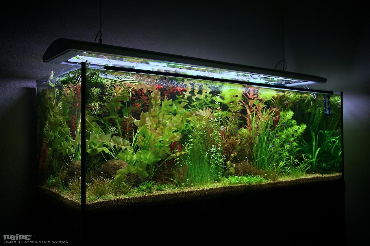Фото светильник в аквариум своими руками