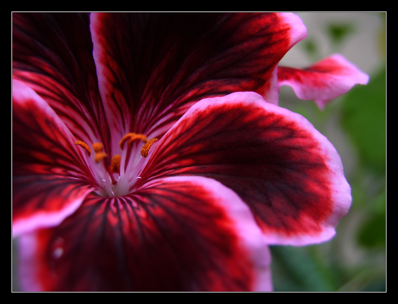 Самые красивые цветы мира фото описание