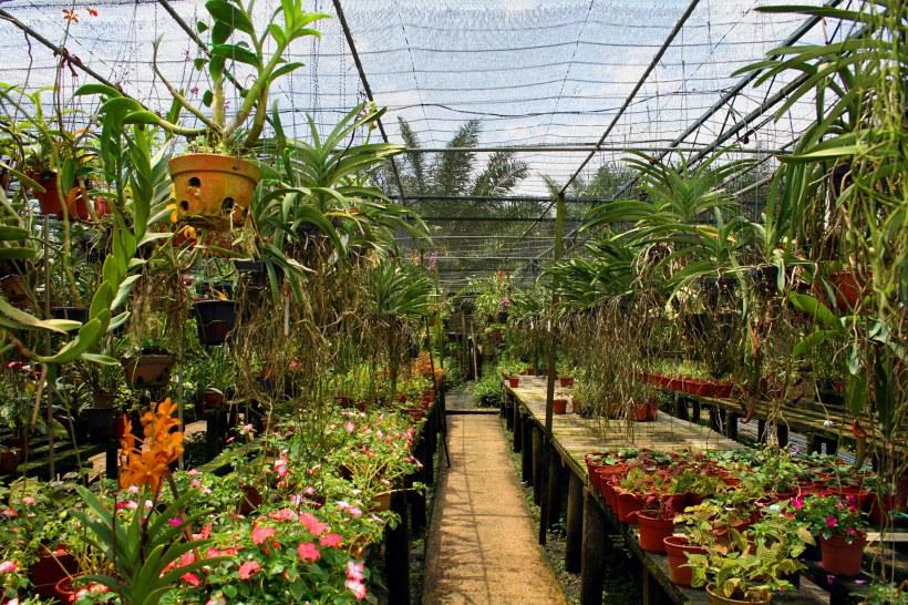 скачать игру цветочная ферма