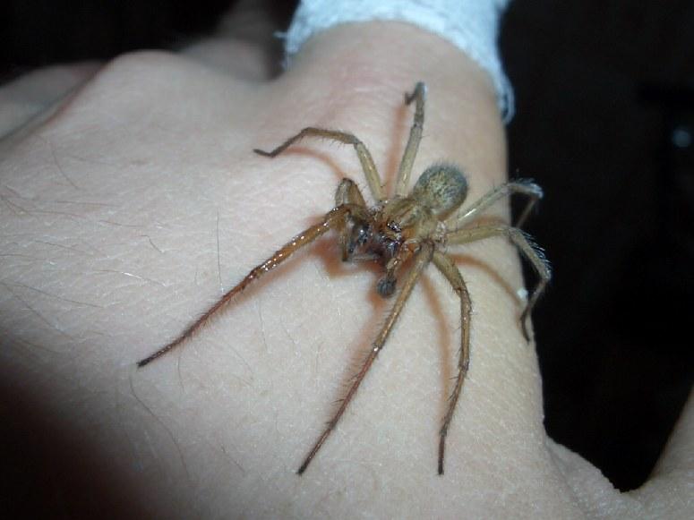 Видеть паука на своей руке