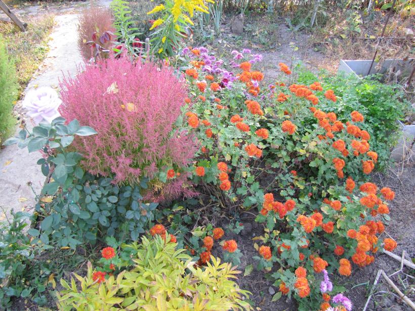Осенние многолетние цветы на даче фото