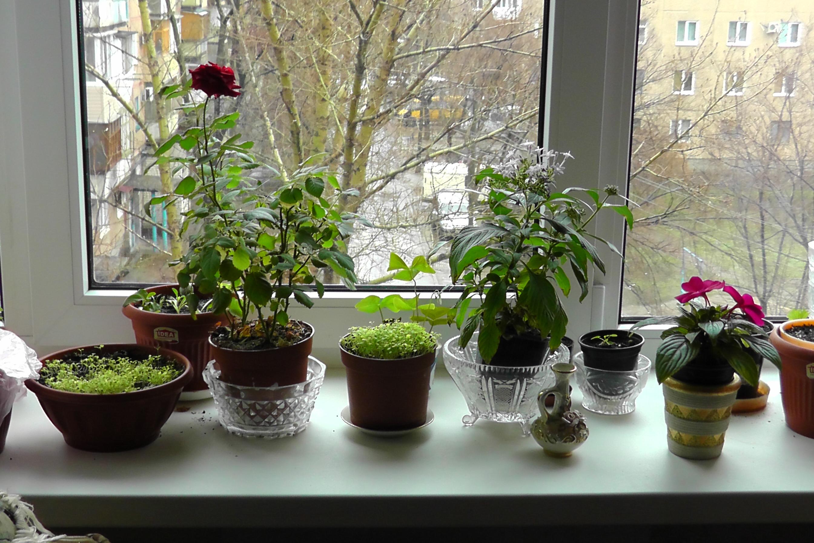 Много цветов дома фото