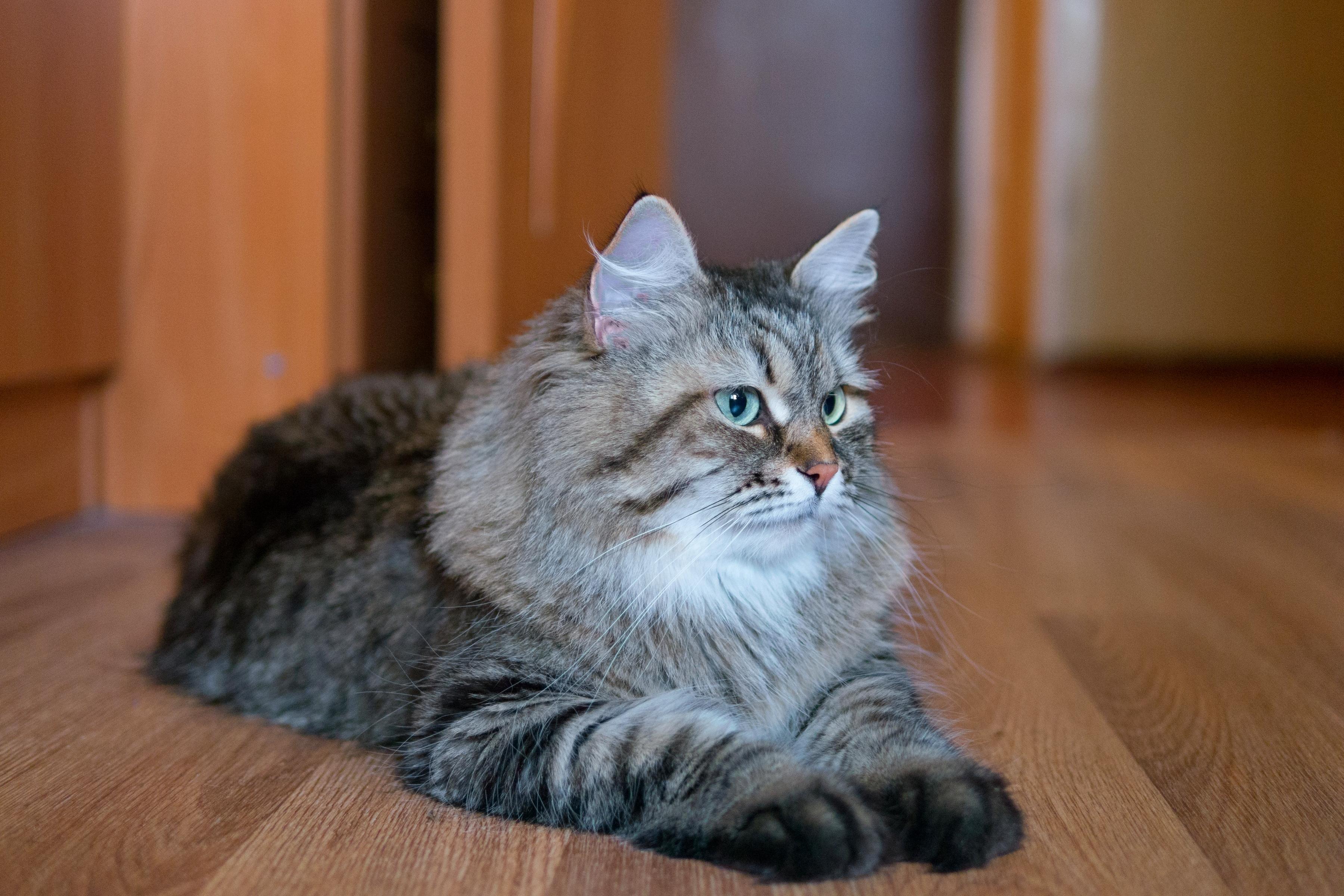 Котята и кошки в Екатеринбурге даром. Фото и цены - E1 ...