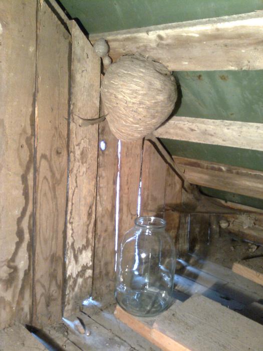 Как избавиться от ос в деревянном доме своими руками